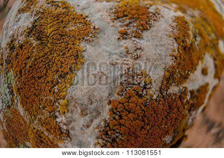 Lichen Background Fisheye