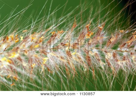 a close up view of a grass in the garden poster
