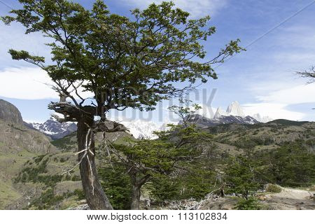 Peaks And Trees In Los Glaciares National Park