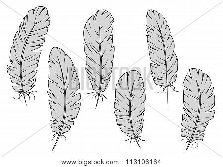 Isolated gray quill feathers set