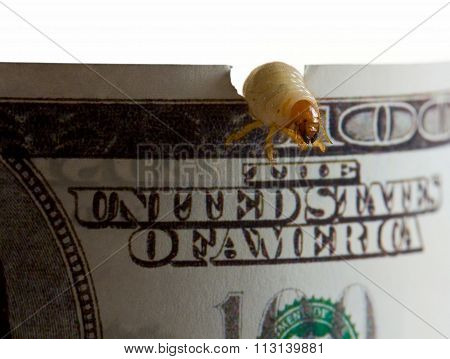 Money Eaten By Worm - Recession Concept