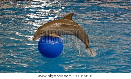 Dolphin jump over ball at the Baltimore National Aquarium poster