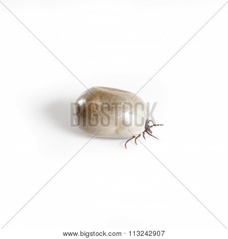 Dangerous Parasite