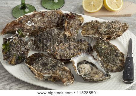 Fresh raw pacific oysters on a plate