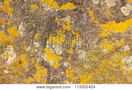 Old Stone Surface With Lichen