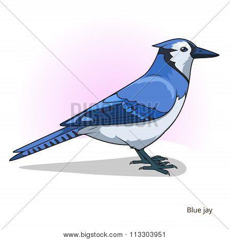 Blue jay bird educational game vector