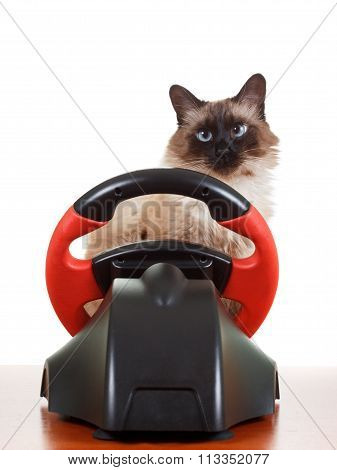 Nice Cat playing a video game console steering wheel with deadpan expression on his face fluffy, isolated on white poster
