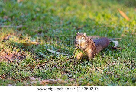 squirrel in nature garden center of Bangkok Thailand