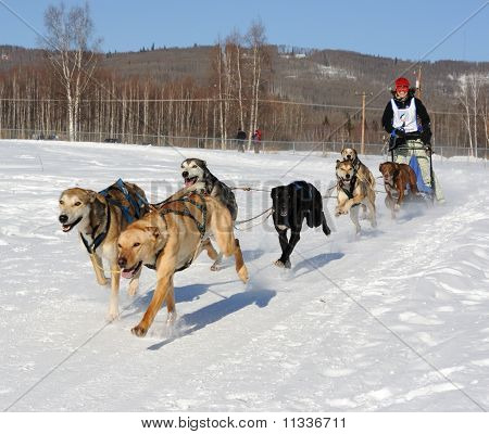Limited North American Sled Dog Race - Alaska