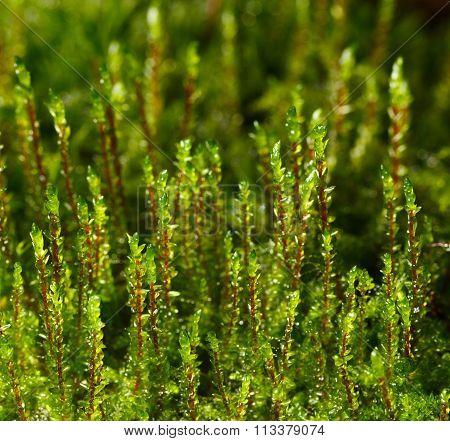 Top Of Moss