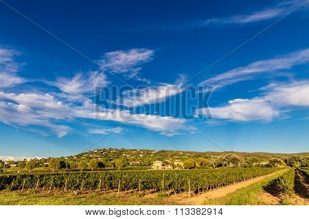 Winery Building And Vineyard-provence,france