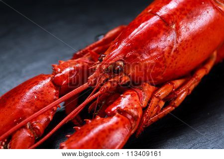Boiled Lobster On Stone Background