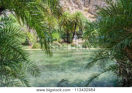 Palms near green river in Preveli, Crete island, Greece