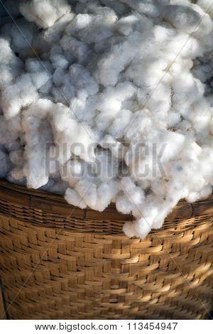 Cotton In Basket