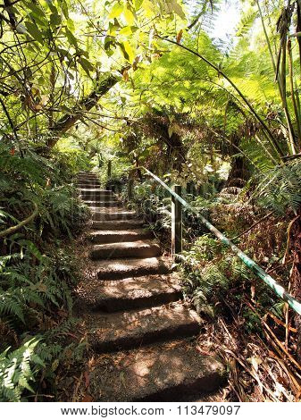 View up the 1000 steps at the Dandenong ranges