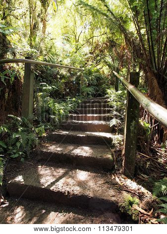 Steps in the rain forest at the Dandenong ranges