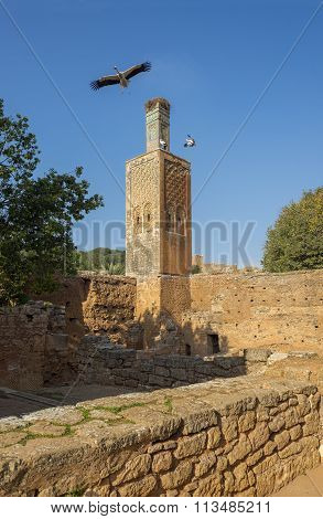 Minaret Of Chellah Necropolis. Rabat. Morocco.