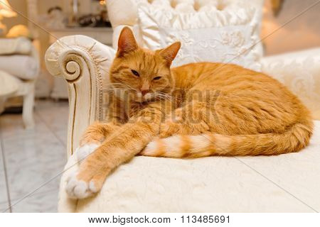 Orange tabby cat having a relaxing rest on some luxurious furniture acting like royalty.