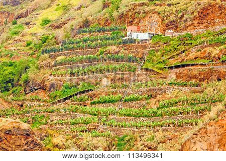Colorful rocky cliff coast of Madeira with banana plantations near Jardim do Mar poster