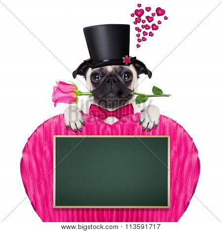 Valentines Love Sick Dog