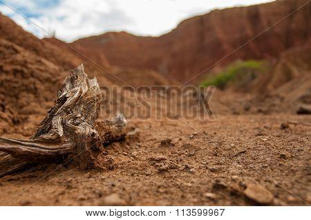 Closeup of wood branch on sand in hot dry desert Tatacoa, Huila