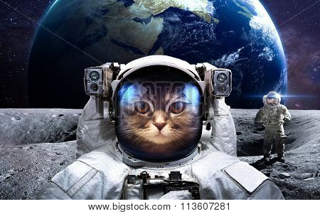 Brave cat astronaut at the spacewalk. This image elements furnished by NASA. poster