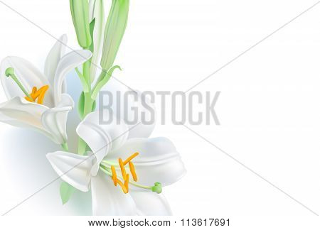 White Lily - greeting card.