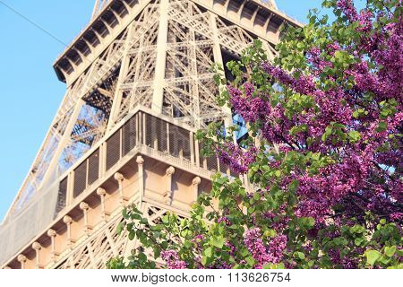 View on The Eiffel Tower in Paris France