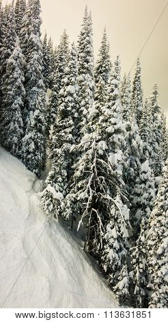 ski resort landscape of steep terrain and snow covered trees
