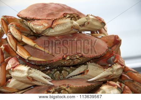 stack of dungeness crabs ready to cook