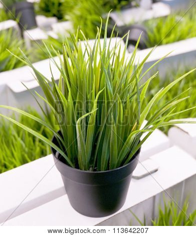 Green Artificial Plant On White Cardboard Box