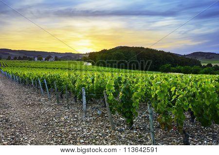 Sunset Over Vineyards Of Beaujolais, Rhone, France