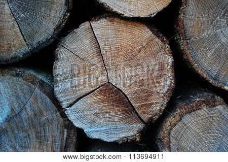 Cross section of tree trunk. Painted grey wooden annual rings.Tree rings in the trunk.
