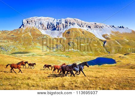 Herd Of Horses Run In A Mountain Valley