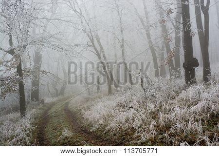 Empty frozen winter trail in the forest