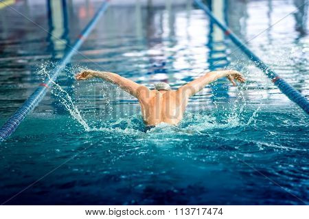 Male Swimmer Performing The Butterfly Stroke At Indoor Swimming Competition
