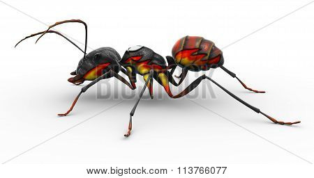 Painted Fire Ant Posed To Look Good