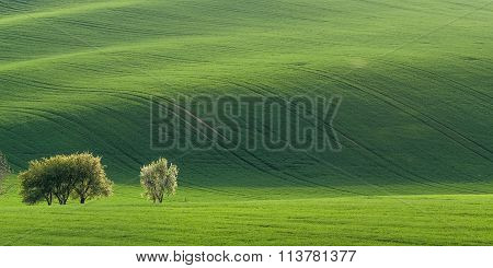 Panorama With Green Field
