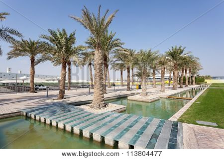 Palm Trees At The Campus In Doha, Qatar