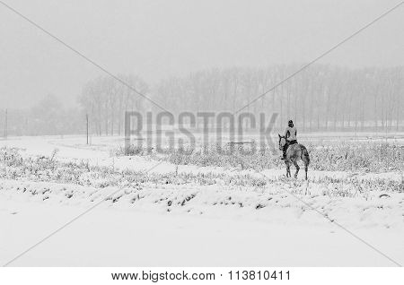 Horseback riding in winter field