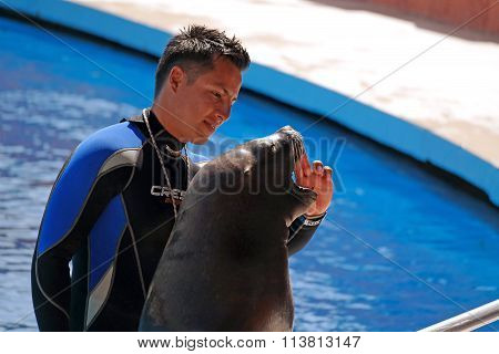 Alanya, Turkey - May 3, 2014: Sea Lion And Trainer On The Presentation Of The Dolphinarium Sealanya.