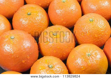 Background Tangerine with water drops