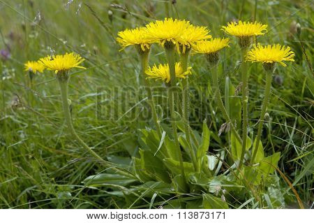 Swiss Hawkbit