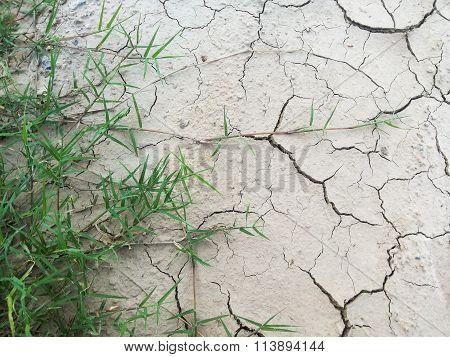 green grass on cracked soil