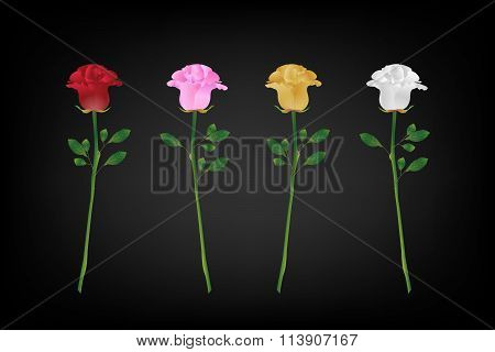Variety Of Rose For Valentines Day (vector Eps10)