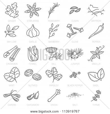 Thin line spices vector icon set