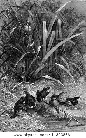 Bird bath, vintage engraved illustration. Magasin Pittoresque 1880.