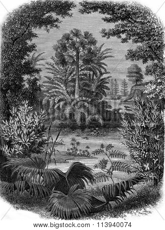 A Landscape of the Miocene epoch, vintage engraved illustration. Magasin Pittoresque 1876.