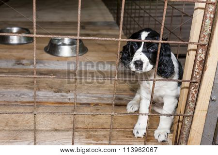 sitting puppy in hutch