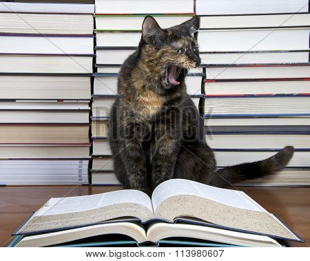 Torbie Tourteshell Tabby Cat sitting in front of piles of books presumably reading a large